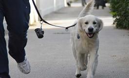 Cani: in arrivo multe con il DNA