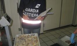 Sequestrate 2 tonnellate di pesce. Sanzioni per 85.000 euro