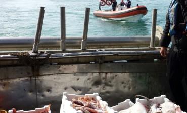 Sequestrati 220 chili di pescato a strascico