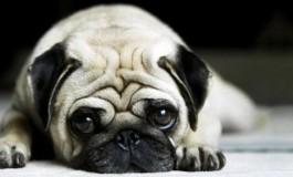 Non ha cura del proprio cane: denunciata