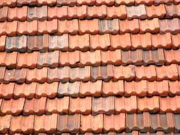 Droga nascosta tra le tegole del tetto