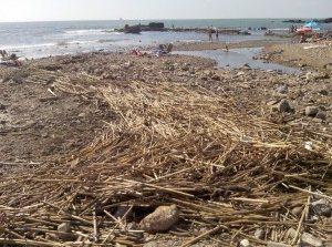 Al via la giornata di raccolta dei rifiuti da spiagge e fondali