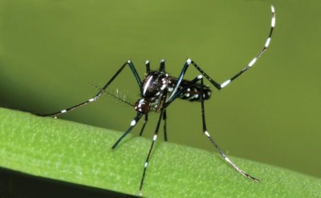 Lotta alle zanzare: i comportamenti da tenere