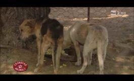 Gorgona: la nuova vita degli animali con i detenuti. Il VIDEO di Rai2
