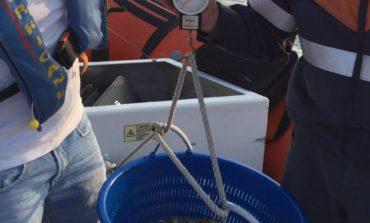 Sequestrate 200 kg di telline dalla Guardia costiera