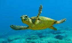 Tartarughe marine trovate morte al largo della costa