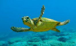 Tartaruga salvata nella rete da pesca