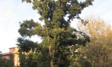 Lipu: evitare potature drastiche agli alberi cittadini
