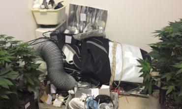 Litigano madre e figlio e la polizia trova un laboratorio di marijuana