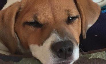 Sul sito del Comune l'elenco dei cani in cerca di padrone