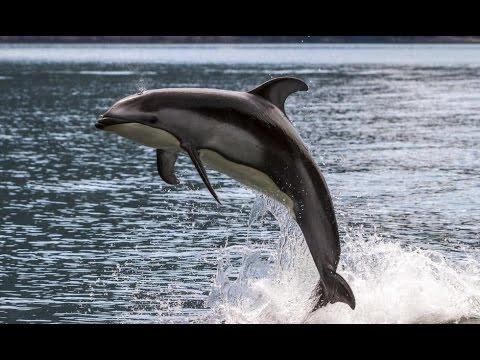 Mare protetto per i delfini, iter in dirittura d'arrivo