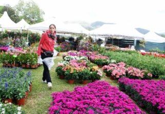 Piazza XX Settembre si copre di fiori