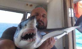 Cucciolo di squalo tra le reti di un peschereccio