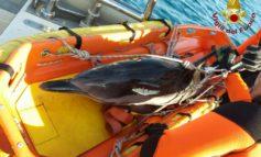 Delfino salvato dai vigili del fuoco