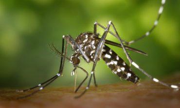 """Zanzara tigre: due casi di """"Dengue"""" in città. Al via disinfestazione"""