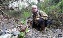 Scoperta foresta pietrificata a Livorno