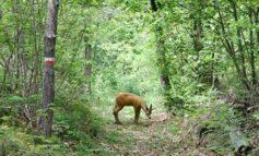 Immobili, poderi e boschi della Toscana in cerca di un progetto