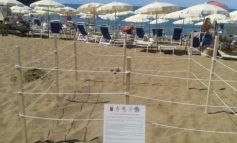 Monitoraggio h24 per il nido di tartaruga Caretta caretta a Castiglioncello