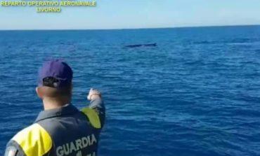 Balene avvistate a Isola d'Elba