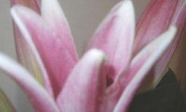 """""""Florigrafia. Il linguaggio dei fiori"""". Il nuovo lavoro di Sabrina Gatti"""