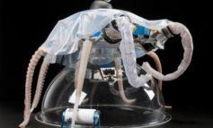 Robotica marina, per S.Giulia open day della Scuola Sant'Anna