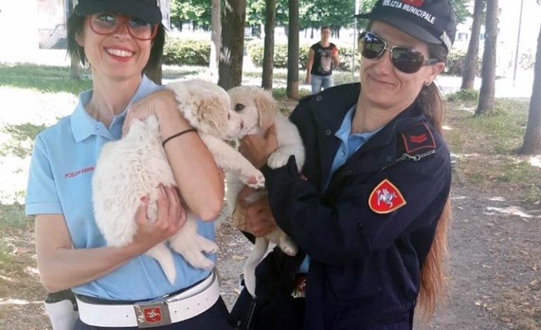 Sequestrati cuccioli di pastore maremmano. Cercasi adozione