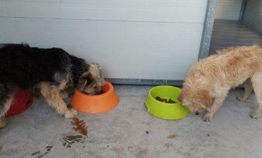 Recuperati quattro cani smarriti la notte di S. Silvestro