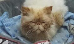 """Salvati tre gatti dalla """"Municipale"""""""