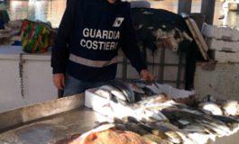 Prodotti ittici: sanzioni a ristoranti e venditori