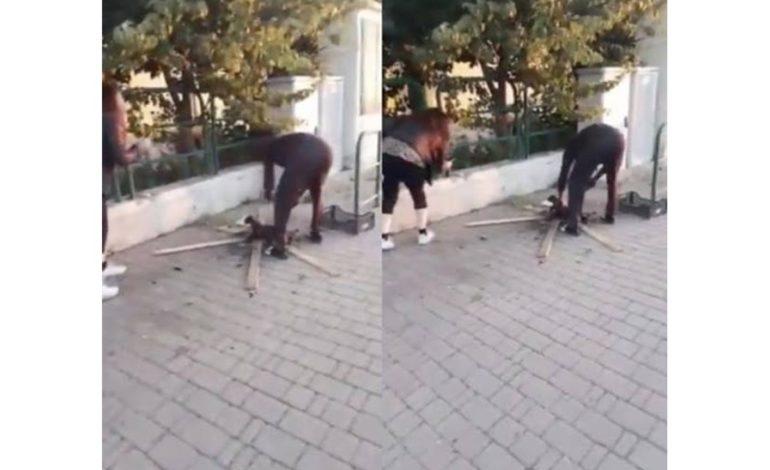 """Uccisione gatto, Romiti: """"Il soggetto sia rispedito a casa propria"""""""