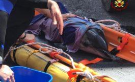 Delfino tra gli scogli senza vita, il cucciolo resta vicino alla madre: salvato