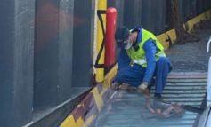 Incidente sul lavoro in porto, operaio ferito nella stiva di una nave