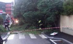 Crolla pino su due auto in sosta
