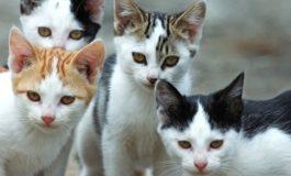 Gatti a banchina, le osservanze del gruppo consiliare 5 Stelle